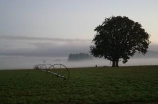 OTE Heritage Tree Program
