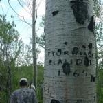 Claudio's tree
