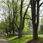 Jenkins grove