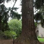 Peg Tree