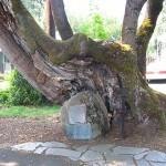 Pow-Wow Tree