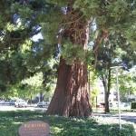 Waldo Park