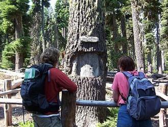 Waldo Tree