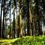 baldock_trees