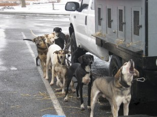 Image of dogs taking a break at an Oregon Travel Experience rest stop.