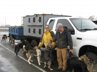 Image of sled dogs stopping at OTE rest area with their owners.