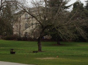 An image of an Oregon Travel Experience Heritage Tree 2012 honoree: OSU's Trysting Tree