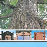 Image of the cover of the Oregon Travel Experience Heritage Trees and Historical Markers map brochure
