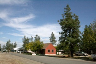 Image of Oregon Heritage Tree the Smokejumper Pine Tree in the Illinois Valley