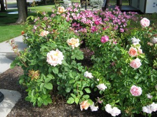 Image of OTE Ontario rest area roses