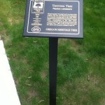 Trysting tree plaque photo