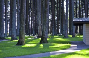 Baldock rest area trees