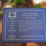 The new OTE Heritage Tree Plaque.