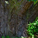 The base of the trunk.