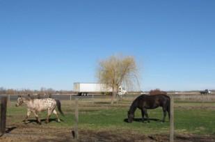 horse_corral