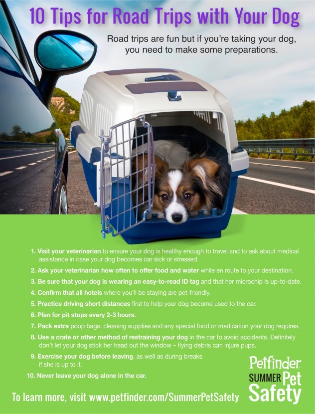 Infographic of road trip with dogs safety tips