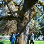 Ellmaker Oak