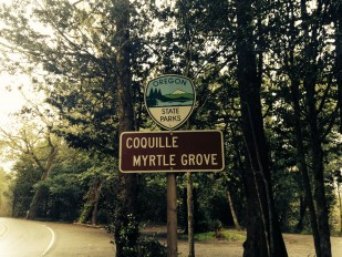 Image of the Coquille Myrtle Grove State Park where the 2015 Coquille Myrtlewood Heritage Trees are located.