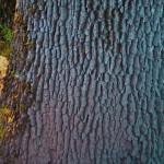 Lee Oak Tree Dedication