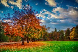 dallas_oregon_autumn